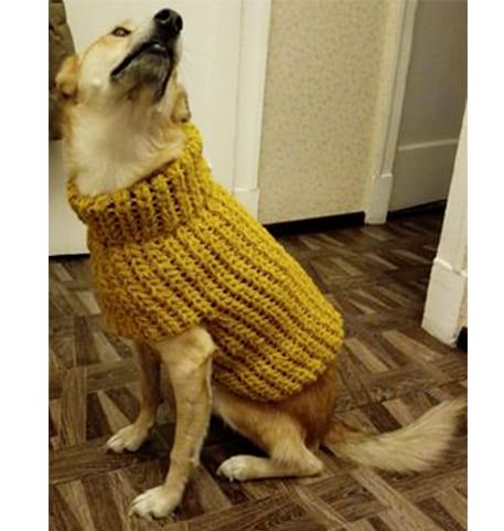 как связать кофту собаке спицами для начинающих